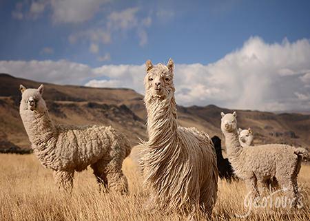 Perú (10 días) inicio Lima / fin Cusco