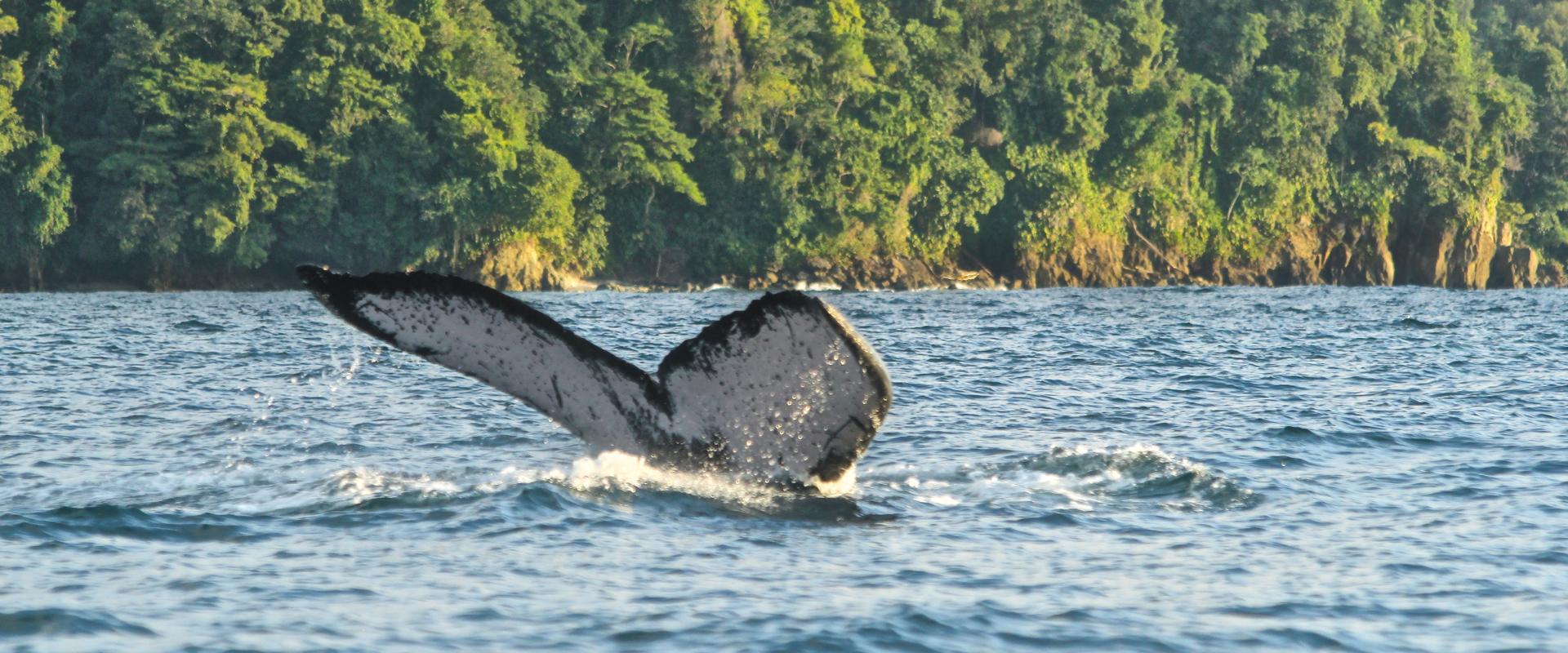 Bahía Solano Ecolodge El Almejal (Ballenas a la vista) 2020